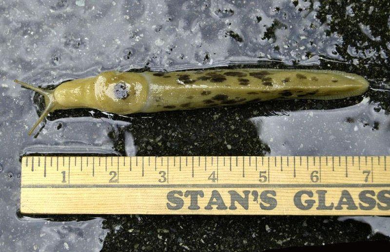 Slug2